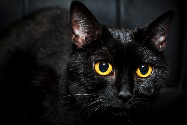 Hechizo para convertirse en gato miedoteca - Los peces traen mala suerte ...