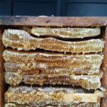 miel, miel bio, le miel, miel de montagne, miel naturel
