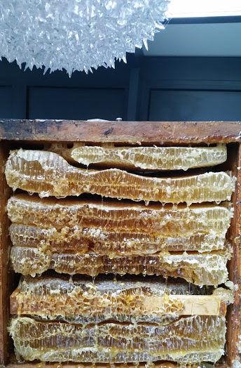 miel en rayon, miel de haute montagne, miel bio, miel montagne, miel et cire, miel avec rayon