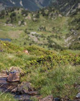 miel bio, miel écologique, miel naturel, miel de montagne, miel du comapedrosa, miel du parc naturel des vallées du comapedrosa, miel de haute montagne