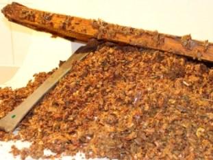 propolis-maroc