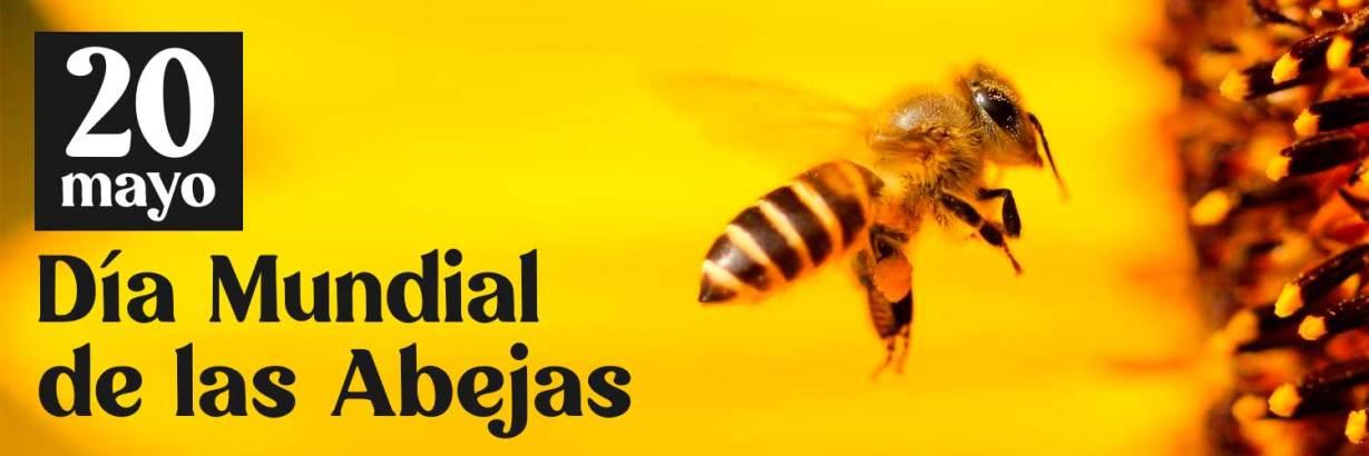 dia-mundial-de-las-abejas
