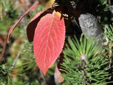 Herbstbilder vom Stöttlbach, Foto: Knut Kuckel