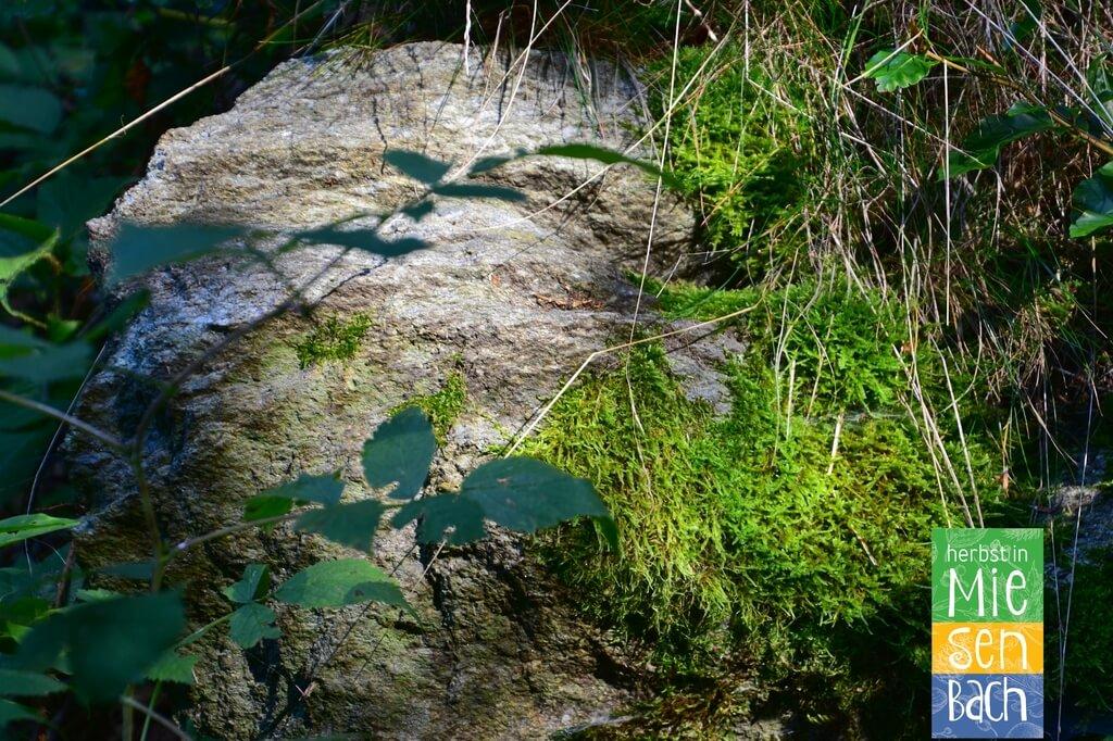 Herbst in Miesenbach (10)