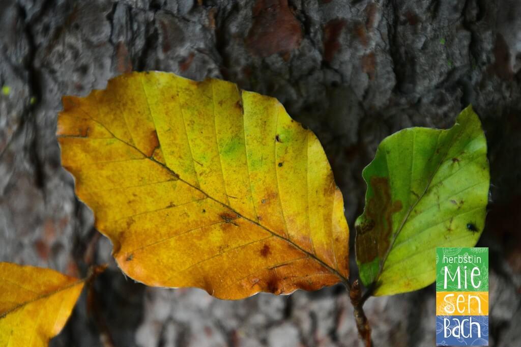 Herbst in Miesenbach (12)