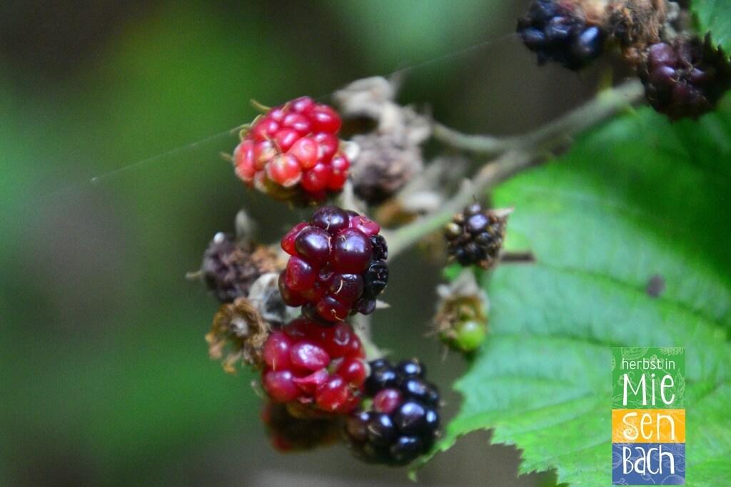 Herbst in Miesenbach (9)
