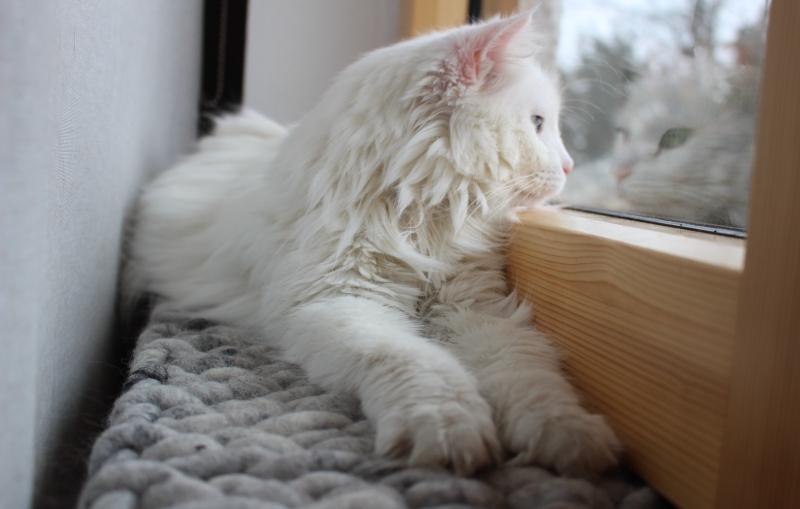 Katzenkissen SCHÖNE AUSSICHT