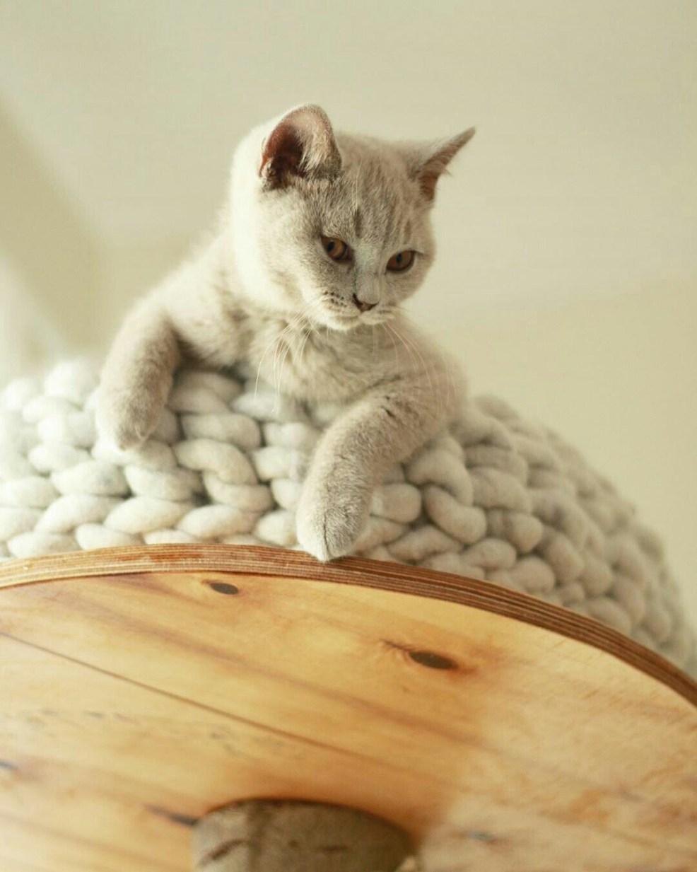 Katzenbett Wollkuschler