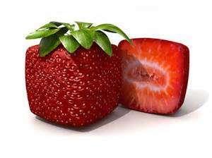 fraise ogm