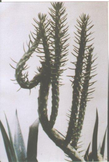 allah_kaktus.jpg