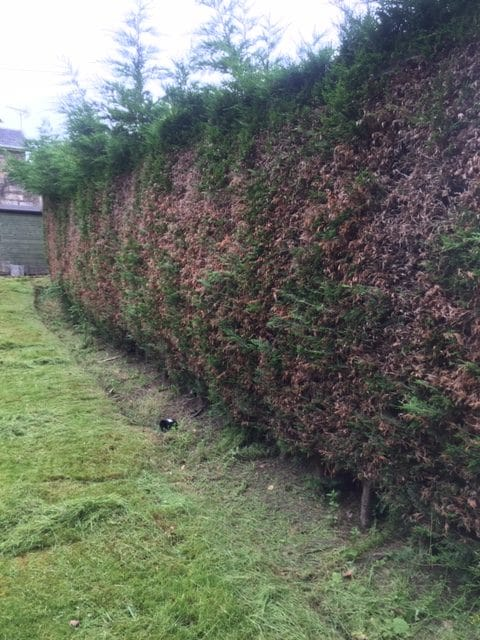 hedge trimming Paisley