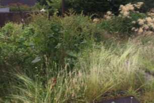 Garden Tidy up Shawlands 1