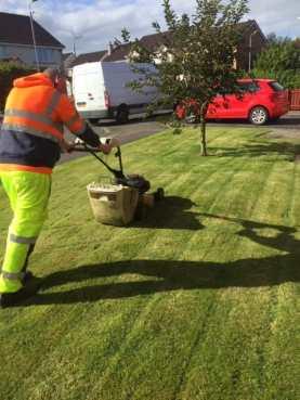 grass cutting paisley
