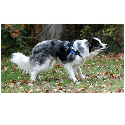 9e0cd1993642 Medium Dog Harness - Mighty Mite Dog Gear