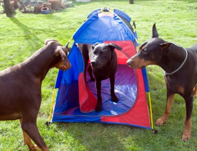 Mighty Mite Dog Tent / Soft Crate
