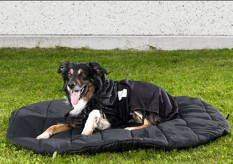 13f2b5c0a4ff Back On Track Therapeutic Dog Travel Bed