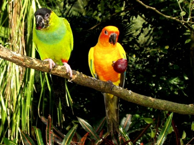Discover them all with birds of the world. Tropical Rainforest Birds
