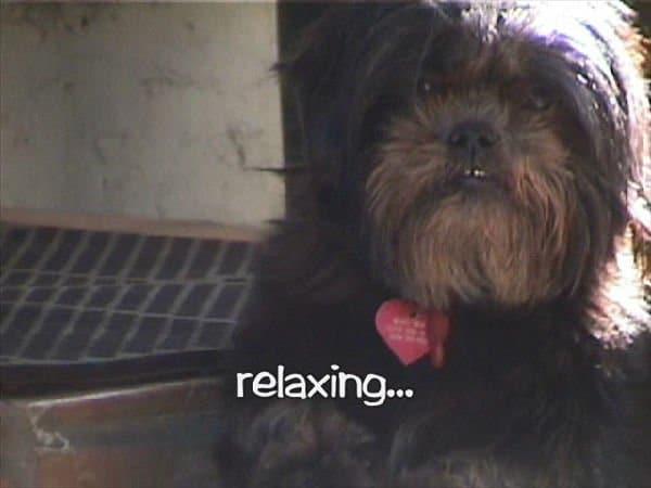 Dog cat radio, musica per cani e gatti