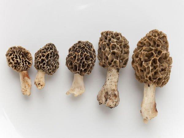 Cibi strani e originali (funghi)