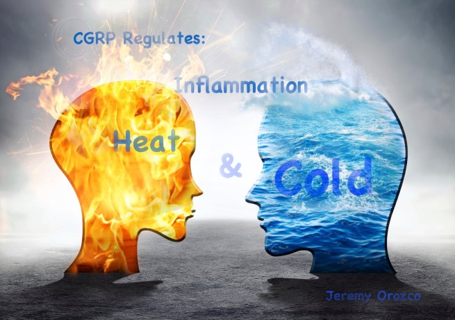 CGRP regulates Inflammation Heat Cold