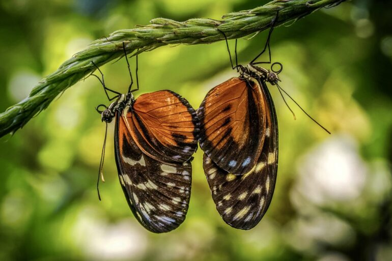 two similar butterflies hanging on a limb