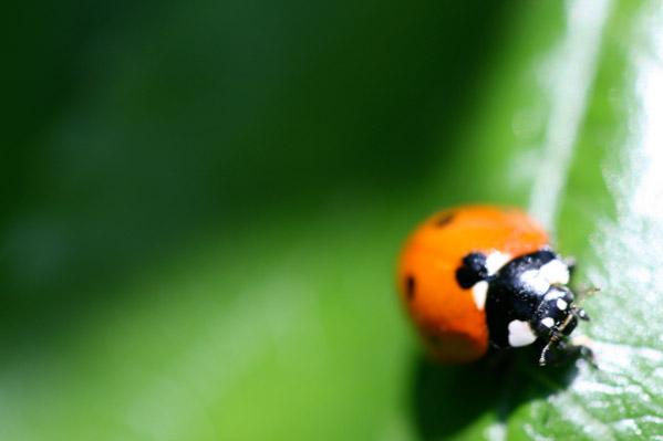 Migrate Design Photography Ladybug