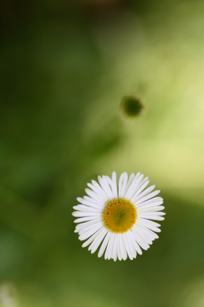 Migrate Design Photography Daisy