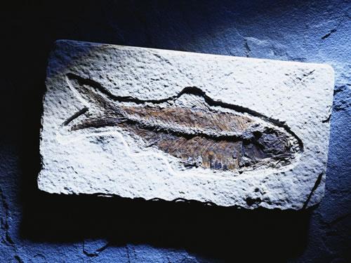 pescado a la sal