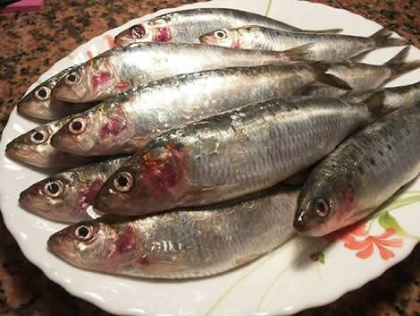 Sardinas marinadas en salazónSardinas marinadas en salazón