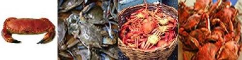 Pasteles de cangrejo (crab cake)