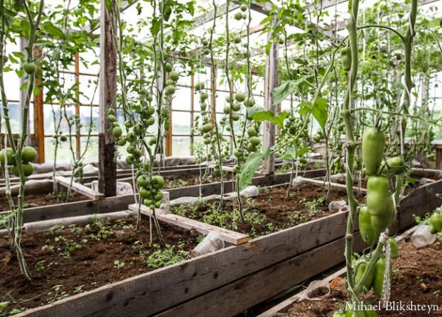 Sergey Krukov's Dacha, Garden and Greenhouse