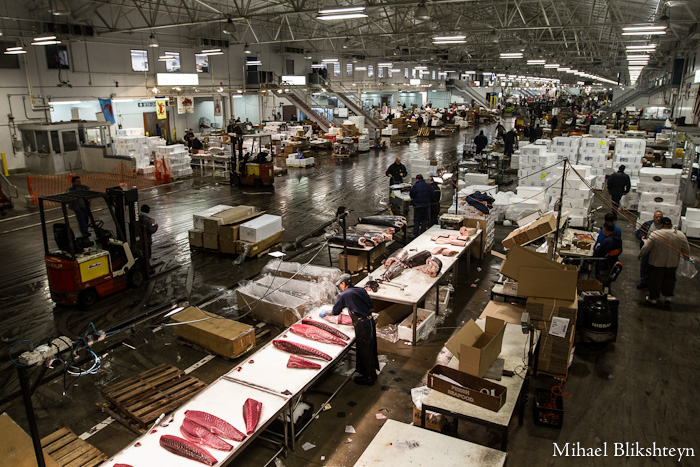 The New Fulton Fish Market at Hunts Point