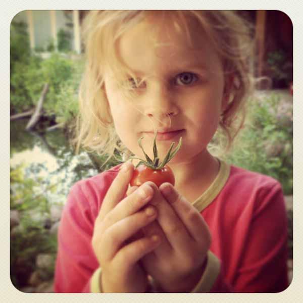 Kesän eka oman puutarhan tomsku!