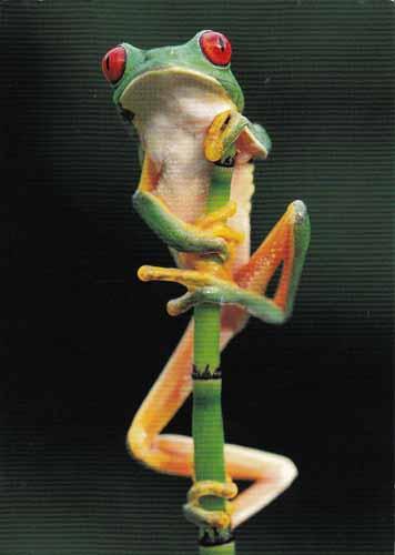 Tällainen sammakko odotti postilaatikossa! :)