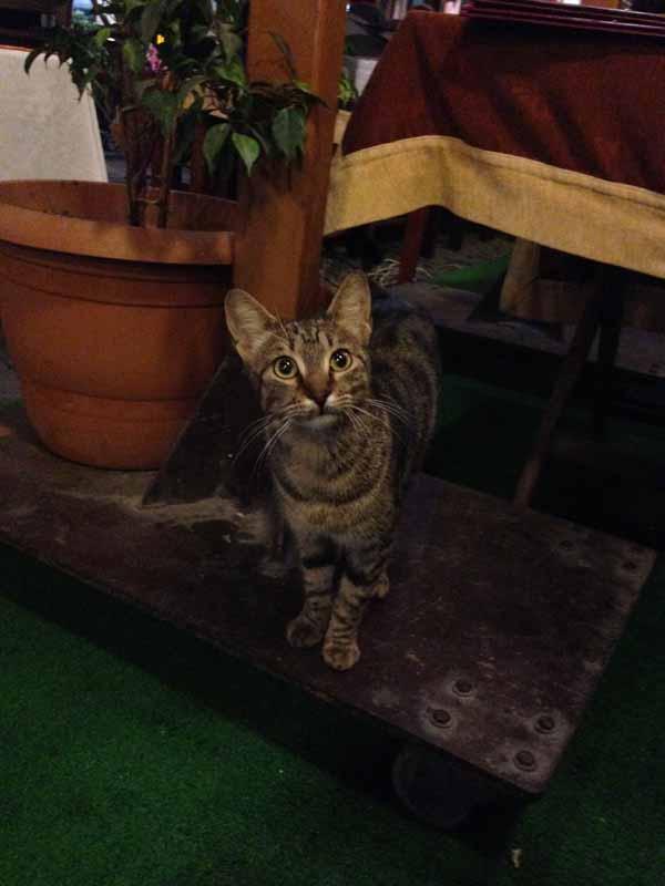Meillä oli seuralaisina kolme kissaa tuona viimeisenä iltana. Annettiin niille vähän ruokaakin. Yksi pieni kisu, mahtoiko olla juuri tämä, pyysi ruokaa aika törkeän röyhkeästi. Taputteli tassullaan munkin jalkaani välillä, vaikka mun huomio oli seuraavan kuvan kissassa...