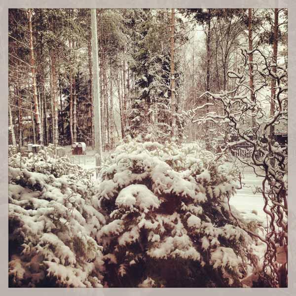 Olkkarin ikkunasta otettu ihana luminen kuva.