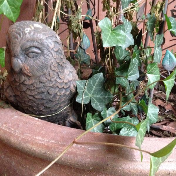Pöllö vahtii ovea (ja on tainnut olla lintujen istuimena tuosta valkoisesta pääkoristuksesta päätellen).