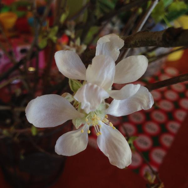 Pienempi kukkaesiintymä.