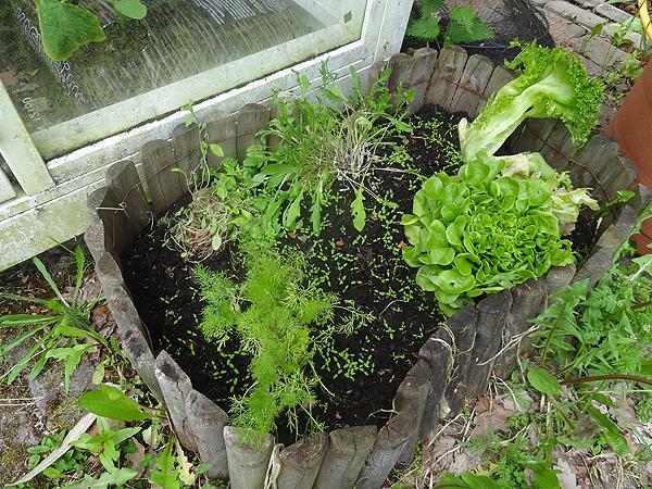 Puutarhakopin oven toisella puolella kasvaa ruokakaupan rucolaa, meiramia, tilliä ja pari salaattia.