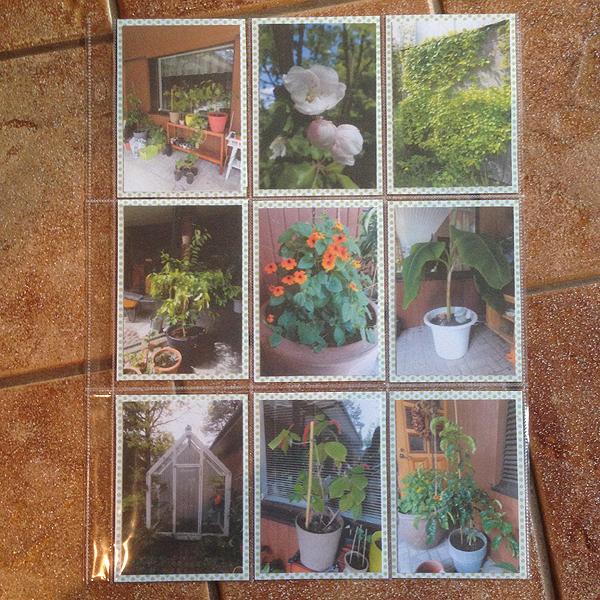 Ekana pocket letter, jossa oli aiheena valokuvaus. Etupuolelle valokuvia, käytin näitä omalta pihalta otettuja kuvia.