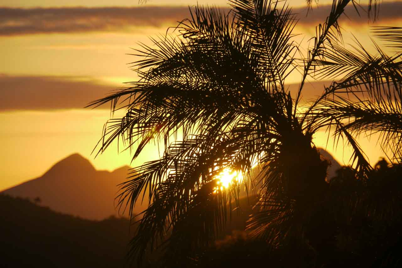 Mijnbrazilie-Brazilië-Nederlander-strijdt-tegen-massale-ontbossing-van-het-bedreigde-Braziliaans-Atlantisch-regenwoud