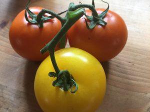 gekleurde tomaten