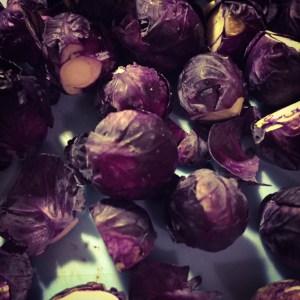 paarse spruiten