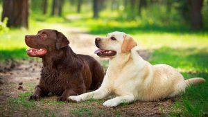 Hondenstranden