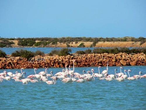 zoutwinning Flamingo