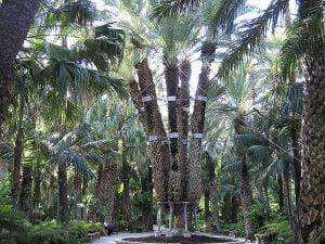 Elche Palmentuin