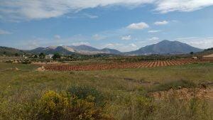 Biologische wijn van Yecla en Jumilla