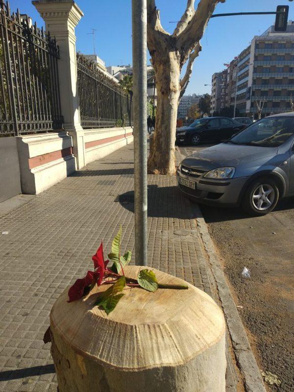 árbol talado en la Avenida Medina Azahara enero 2018
