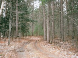 A rural road near Lake Ostego, in northing Michigan.