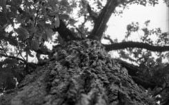 A very cool image at minimum focus. I just leaned up against this tree, looked up and snapped the shutter.